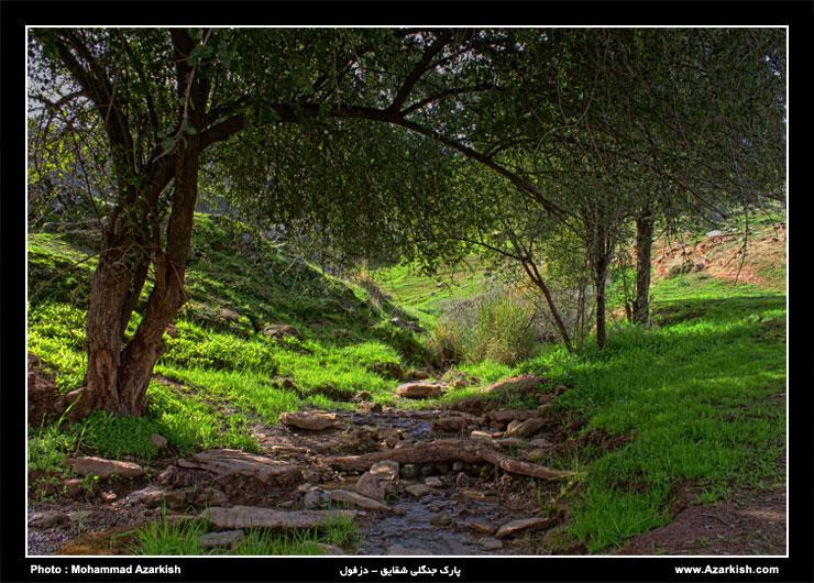 پارک جنگلی شقایق دزفول - میهمانی دلنشین طبیعت - عکس : محمد آذرکیش